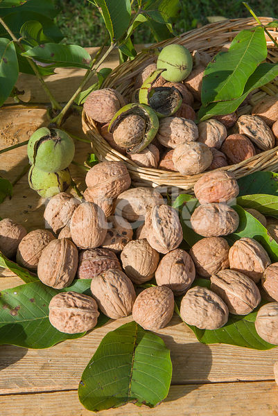 Juglans regia, fruits, noix
