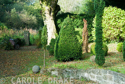 A group of shaped evergreens behind the house, with the wild garden beyond. The Cors, Laugharne, Camarthenshire, Wales, UK