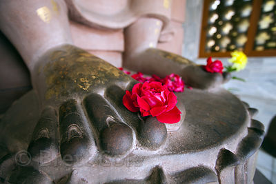 Roses in the feet of a Buddha statue in a temple at the Thai Buddha Vihar in Sarnath, India. Sarnath, just north of Varanasi,...
