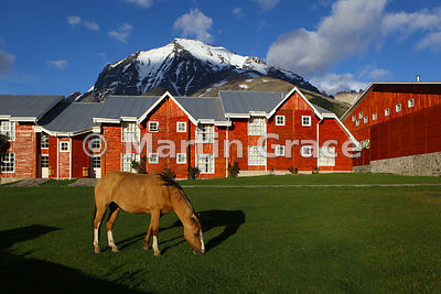 Horse grazing the grass in front of Hotel Las Torres, Torres del Paine National Park, Patagonia