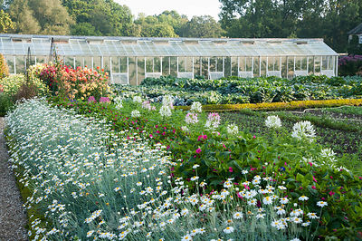 Bright annuals such as argyranthemums and cleomes, the spider flower, line the central path of the walled kitchen garden, wit...