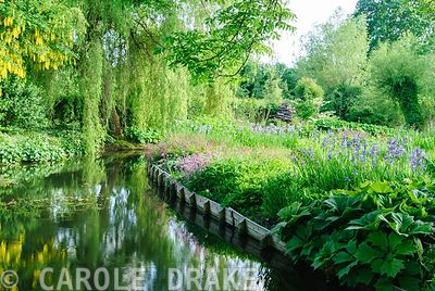 Mill pond framed by plants including irises, rodgersias, ragged robins and tall willows. Westonbury Mill Water Garden, Pembri...