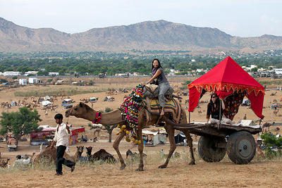Western tourists are taken for a camel ride in Pushkar, Rajasthan, India