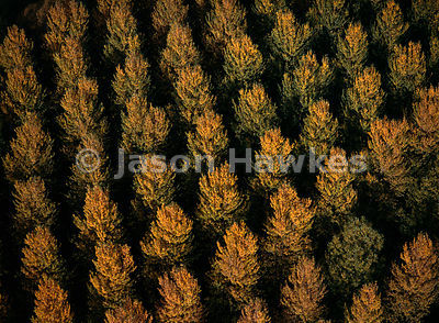 Trees in Autumn , Berkshire