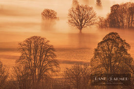 Misty mood in moor - Europe, Germany, Bavaria, Upper Bavaria, Kochelsee - digital