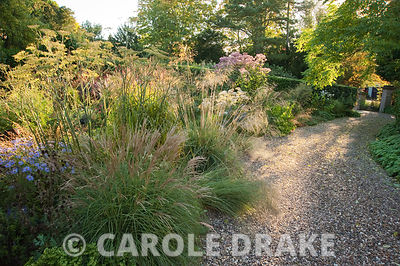 Morning sun illuminates the drive and the gravel garden full of grasses and herbaceous perennials including Stipa gigantea, m...