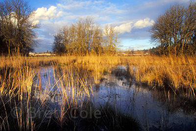 Wetlands and Ash forest in Amazon Park, Eugene, Oregon.