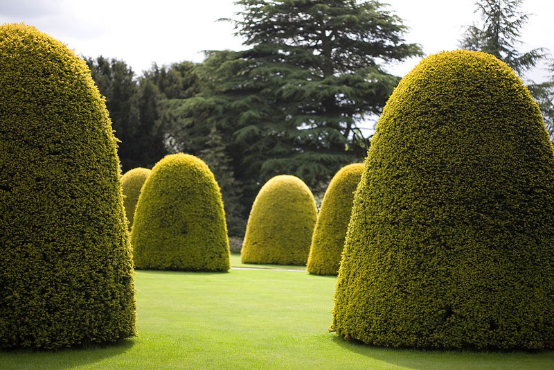 giant topiaries in garden