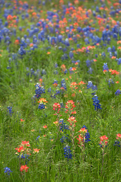 Ennis Wildflower Mix