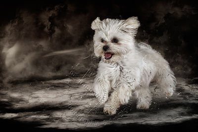Art-Digital-Alain-Thimmesch-Chien-799