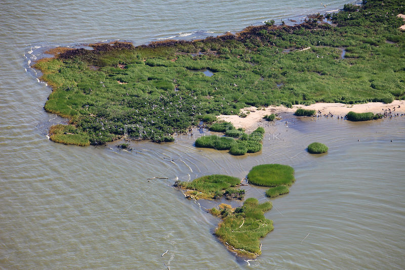 Aerial view of oiled bird nesting colonies in Barataria Bay area of the Mississippi River delta, contaminated by oil from the...