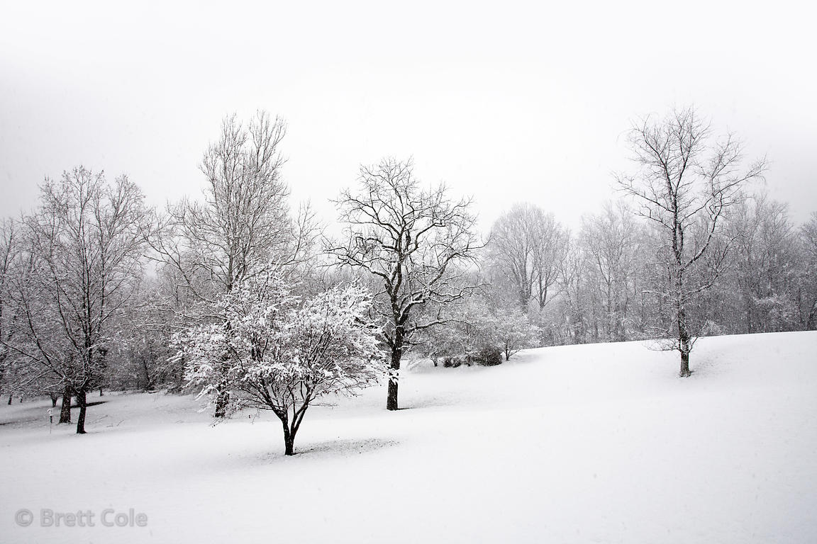 Heavy snow in a remant area of riparian and prairie woodlands, near Gaithersburg, Montgomery County, Maryland