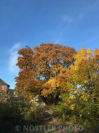 Trees on Christianshavns Vold