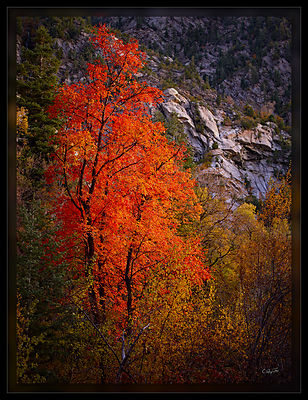 091016_RedTreeGranite_CF000464_1_v1-Edit_PD