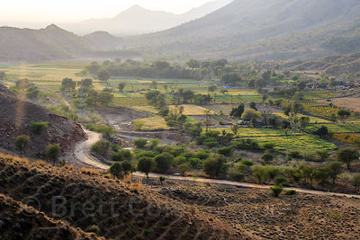 Beautiful wheat fields and flower farms in the desert, Amba village, Rajasthan, India