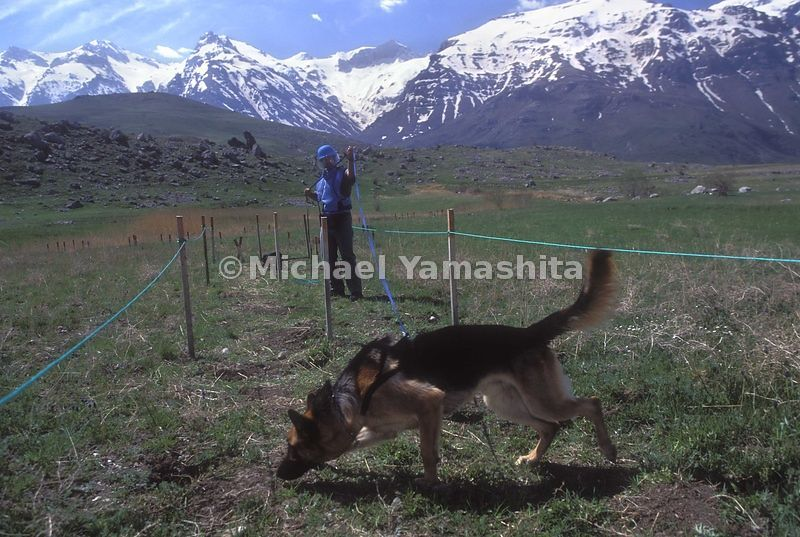 Kinespi Mine Field. Dog operation in Kurdistan, dogs can clear up to 3500sq meter/ day.