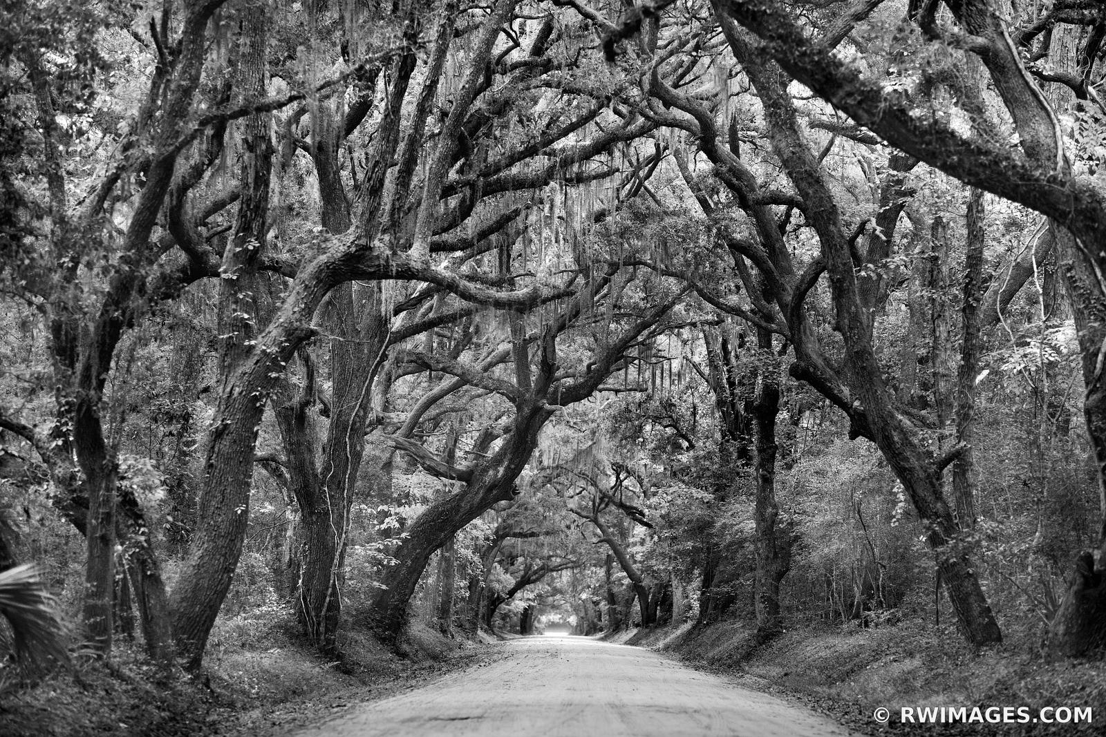 BOTANY BAY ROAD EDISTO ISLAND SOUTH CAROLINA BLACK AND WHITE