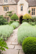 The courtyard garden with lavender lined path and clipped yew at Cothay Manor, Somerset