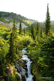 MOUNTAIN STREAM MOUNT RAINIER NATIONAL PARK WASHINGTON STATE COLOR VERTICAL