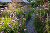 A slate path winds between clumps of tall Verbena bonariensis and low Teucrium hircanicum in the Barn Garden. The Bay Garden,...