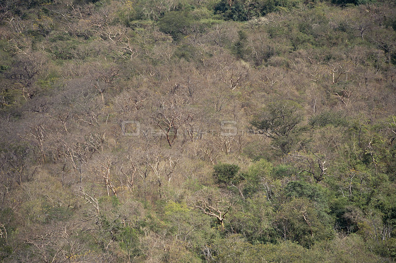 Aerial view of tropical dry forest, Santa Rosa National Park, Costa Rica, dry season