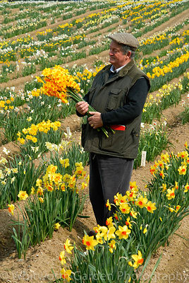 Ron Scamp in his daffodil fields, holding a bunch of his latest introduction Narcissus 'Katherine Jenkins'. © Jo Whitworth