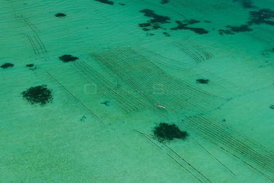 Aerial view of a seaweed farm growing agar-agar for processing into carageenan (gelatinous extracts used as binder for food o...