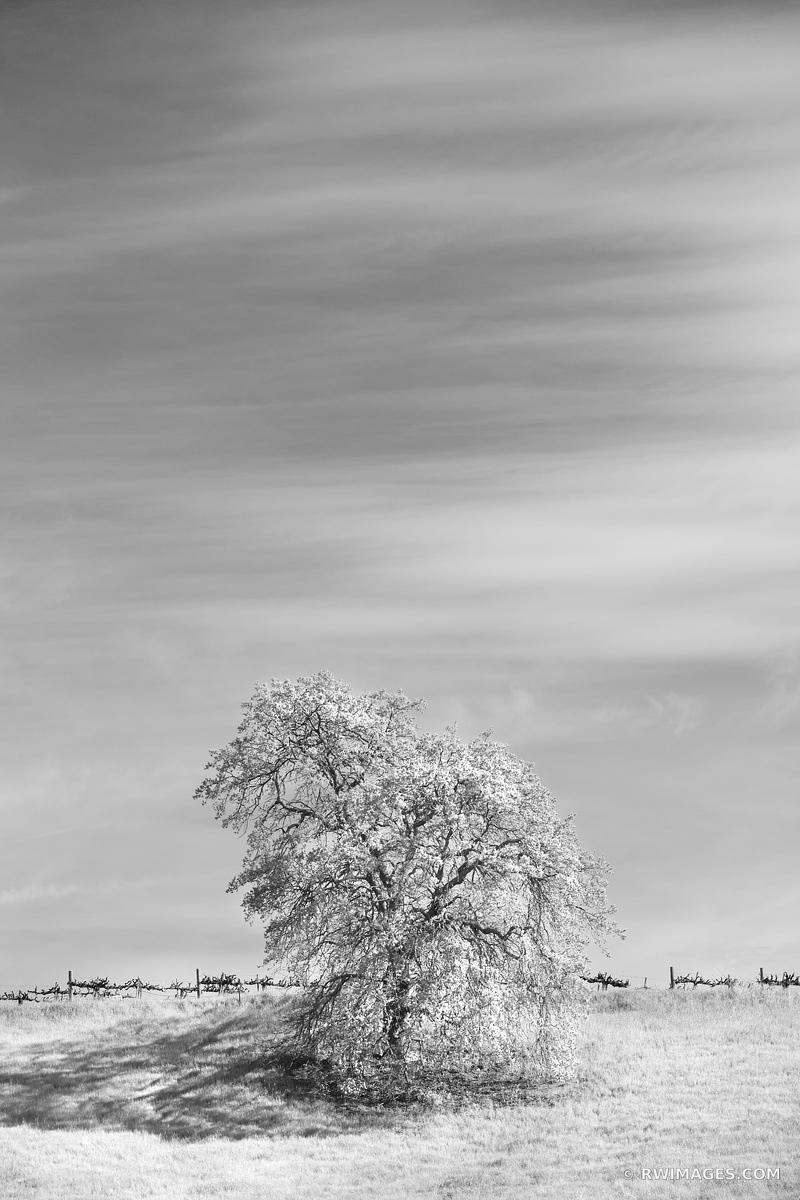 LONE OAK NAPA VALLEY BLACK AND WHITE VERTICAL