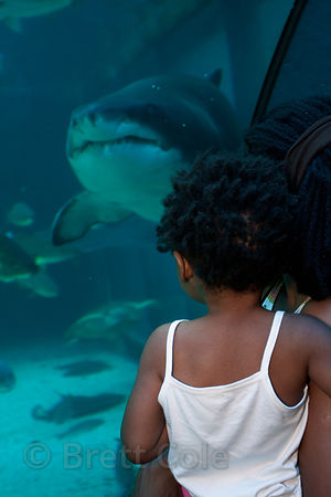Children watch a shark, Two Oceans Aquarium, Cape Town, South Africa