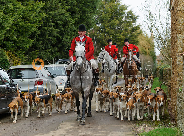 The Belvoir Hunt at Springfield Farm 20/2