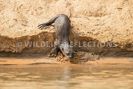 giant_otter_sand_slide-6