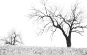 Silhouette of leafless trees in winter (black and white)