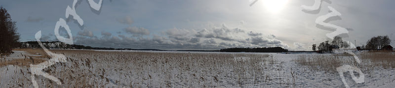 frozen_sea_reeds_wide_panorama