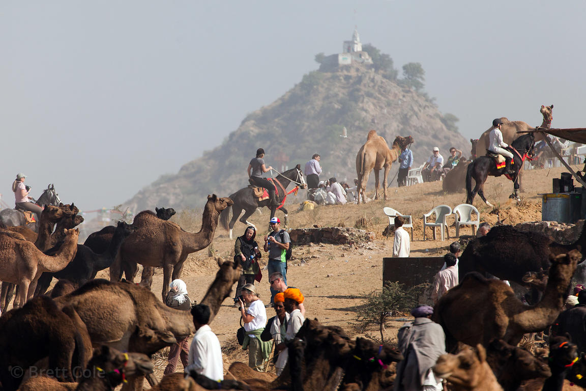 General view of the Pushkar Camel Mela, Pushkar, India, including Gayatri temple.