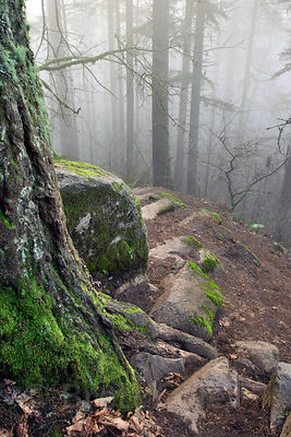 A mystical scene in the foggy forests of Spencer's Butte in the Willamette Valley, Oregon.