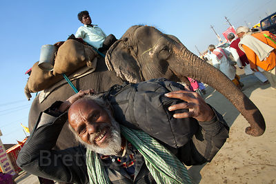 An elephant at the 2013 Kumbh Mela, Allahabad, India.