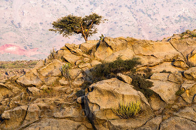 Rocky desert ecosystem in the Aravali mountains, Ajaypal, Rajasthan, India