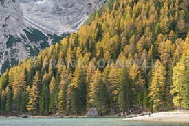Stunning Lago di Braies a beautiful Alpine lake in wonderful autumn colour.  The Braies lake is in Dolomites, South Tyrol, It...