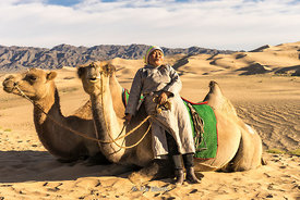 A woman taking a rest with camels in the South Gobi Desert, Mongolia.  In the Khongoryn Els sand dunes in Gobi Gurvansaikhan ...