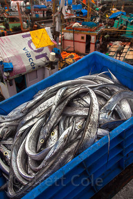 A crate of freshly caught fish at Sassoon fishing dock, Mumbai, India.