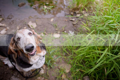 humorous senior snaggletooth dog looking upward from stream