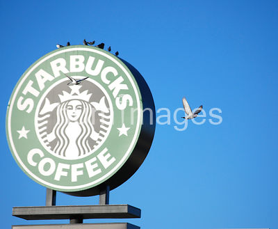 Starbucks sign with pigeon flying toward it
