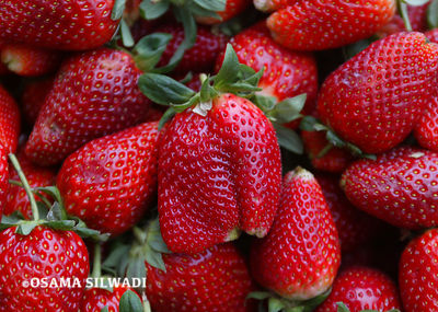 Fruits of Palestine -Strawberry