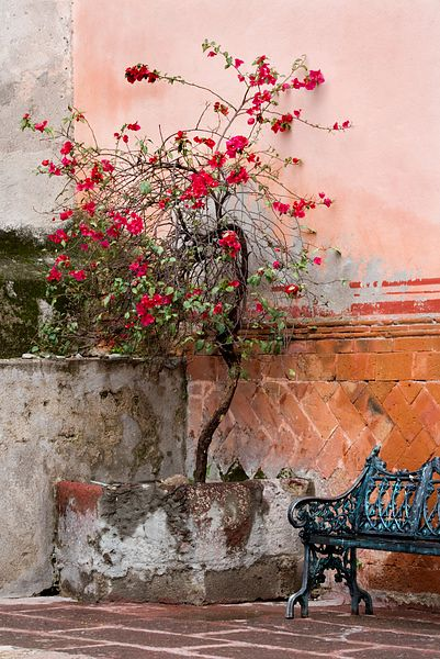 Bench and Bougainvillia