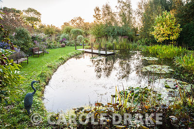Pond with waterlilies and jetty, with beds of late flowering perennials and grasses beyond including asters and chrysanthemum...