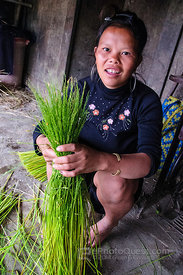 Preparing Young Rice for Eating