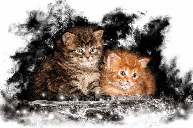 Art-Digital-Alain-Thimmesch-Chat-10