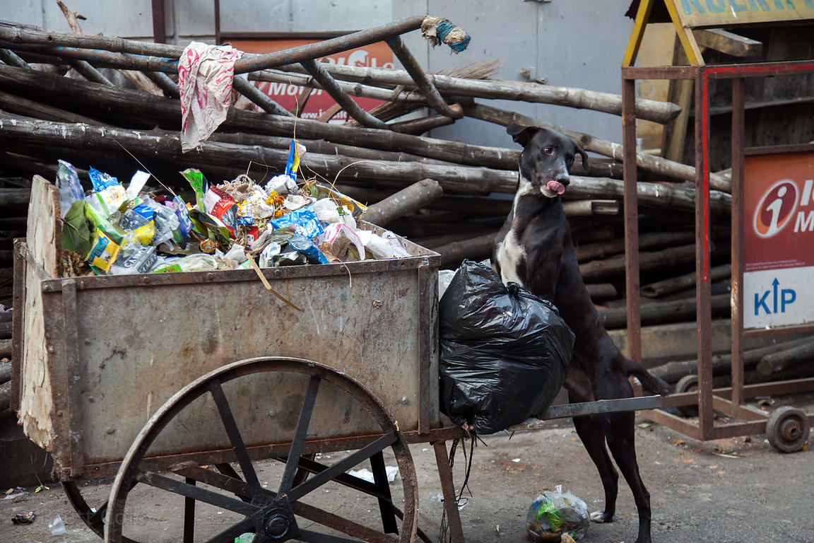 A stray dog near a trash cart in Shyambazar, Kolkata, India.
