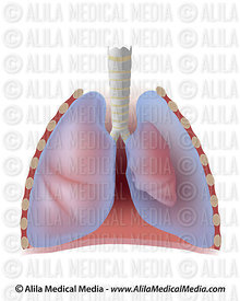 Pulmonology Images & Videos