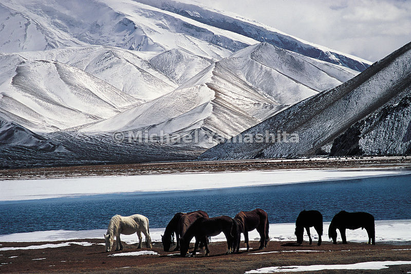 Horses by the Pamirs mountain range in China